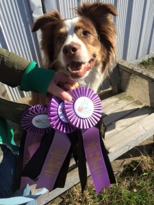 Rally Obedience Training Ribbons